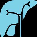 ALT / AST / GGT – liver function tests
